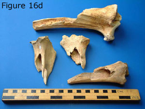 bones6