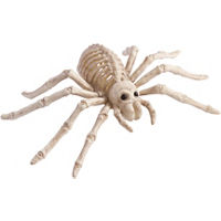 Skeletal Spider