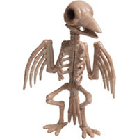 Fake Raven Skeleton