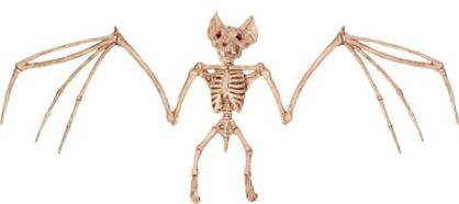 Fake bat skeleton