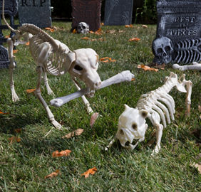 Spooky, Scary, Inaccurate Skeletons