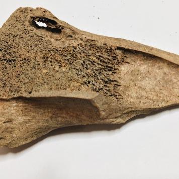 Butchered bone